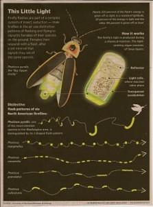Fireflies illustrated_casartblog