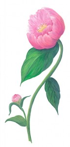 Casart Peony comes in assorted colors and in a pattern