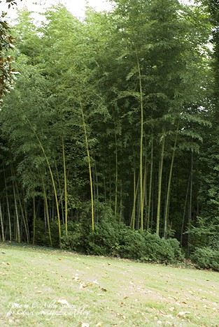 Rothesay_Bamboo_casartblog on Slipcovers for your walls