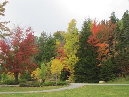 fall foliage on casartblog