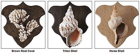 KRC_seashell-trophy-mounts, as seen on Slipcovers for your walls, casartblog