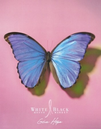 Casart coverings features Blue Morpho-White House/Black Market Catalog on Slipcovers for your walls, casartblog