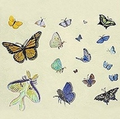 Casart Butterfly Composite_casartblog