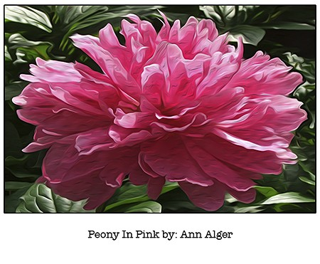 Ann Alger Peony In Pink_for Casart coverings