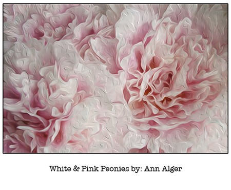 Ann Alger White & Pink Peonies_for Casart coverings