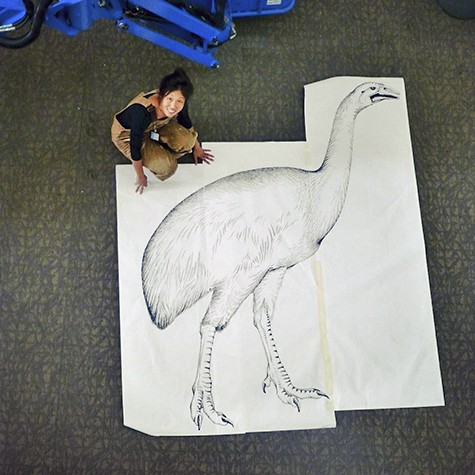 Jane Kim, gian moa, cornell uiniversity bird mural, on slipcovers for your walls, casartblog
