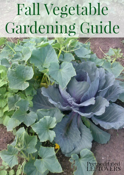 Fall Vegetable Gardening on casartblog