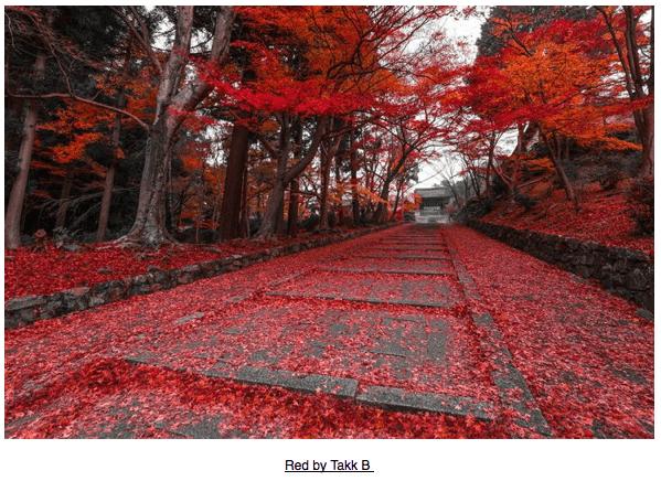 Autumn via purple leaves 3 on casartblog