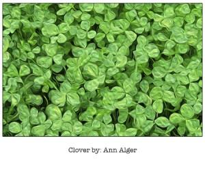 Casart coverings_AA_CloverPopUpCovering_via casartBlog