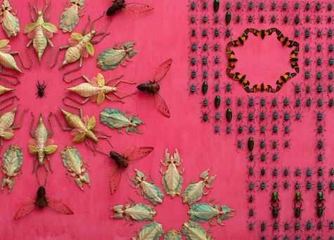 Casart coverings features 3_Wonder_Bug-covered-walls_Smithsonian-Renwick-Gallery_Jennifer_Angus_dezeen_Jennifer_Angus_on Slipcovers for your walls, casartblog