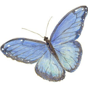 Casart Single Blue Butterfly_Slipcovers for your walls, casartblog