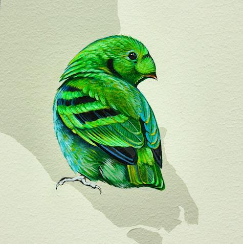 Detail Broadbill bird_casartblog