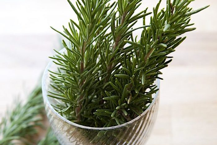 Rosemary extraction casartblog