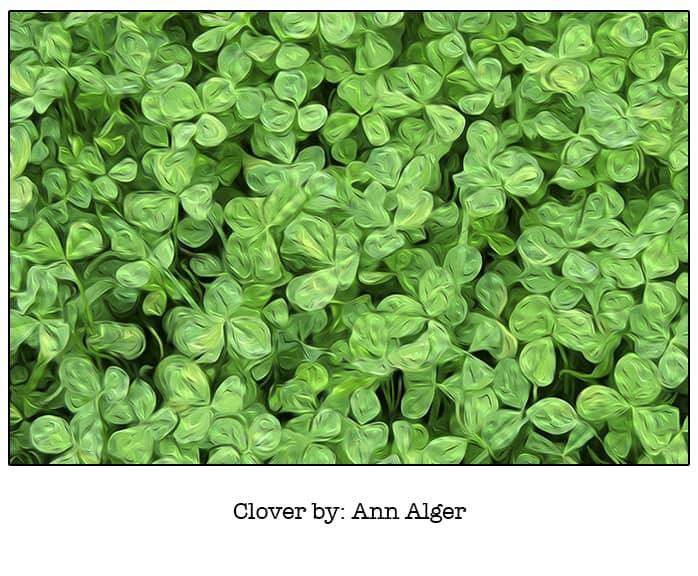 Clover- Ann Alger_Casart Coverings removable wallpaper_casartblog