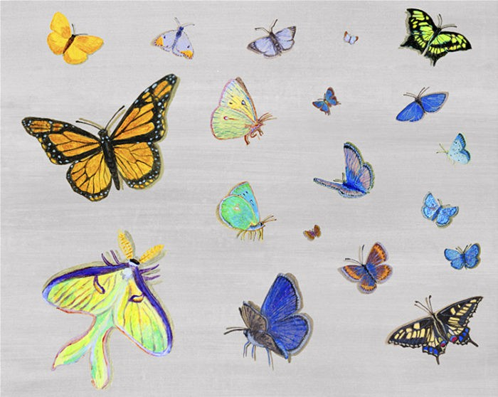 Casart Coverings Customized Butterfly Composite temporary wallpaper_casartblog
