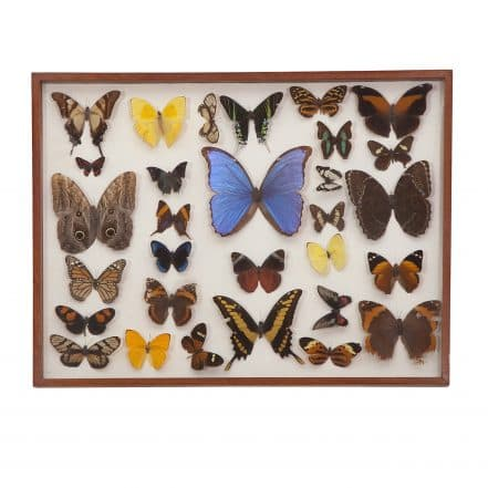 Sasha Bikoff Scientific Butterfly Study Wall Hanging on casartblogs