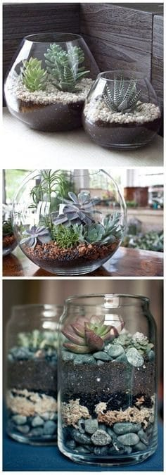 BuzzFeed Terrarium Ideas on casart blog