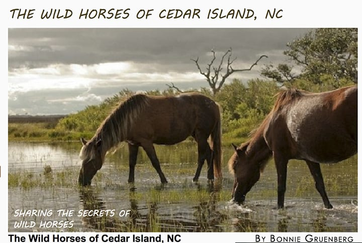 Cedar Island Wild Horses_Bonnie Gruenberg_casartblog