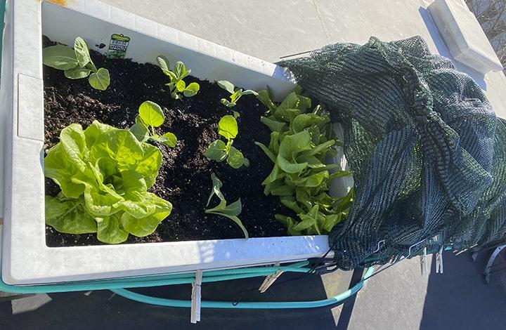 Casart rooftop garden urban planter