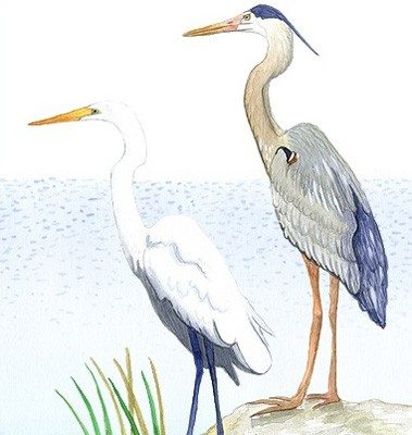 Casart Gulf Coast Birds - egret and heron removable wall mural panel