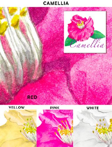 Casart_Camellia_Sample_web