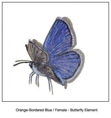 Casart_Orange-Bordered Blue Female Butterfly Detail_13x