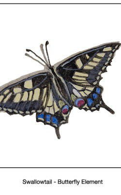 Casart_Swallowtail Butterfly Detail_17x