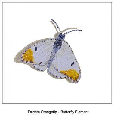 Casart_Falcate Orangetip Butterfly Detail_1x