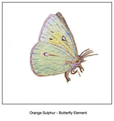 Casart_Orange Sulpher Butterfly Detail_4x