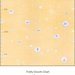 Casart Coverings Orange Fireflies Growth Chart detail – Tots Tweens & Teens (T3)
