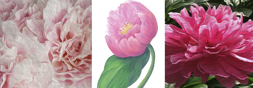Many Casart Peonies work together as removable reusable wallpaper