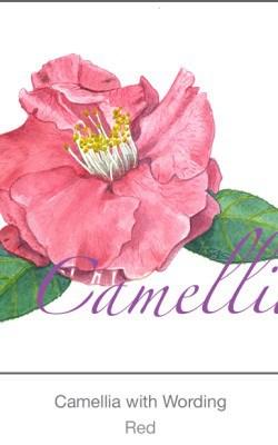 Casart Red Camellia 1x