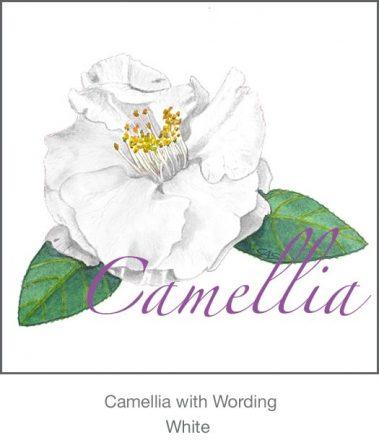 Casart White Camellia 2x