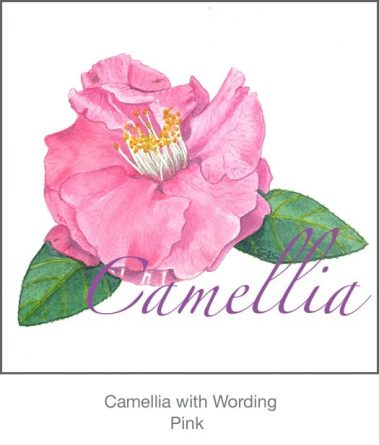 Casart Pink Camellia 3x