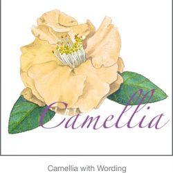 Casart Yellow Camellia 4x