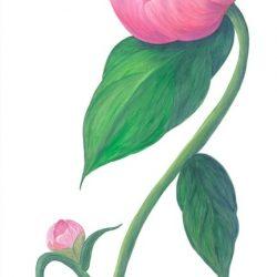 Casart Pink Single Peony 1