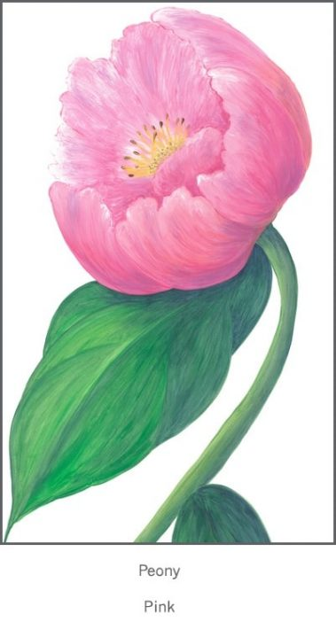 Casart Pink Single Peony Detail 1x