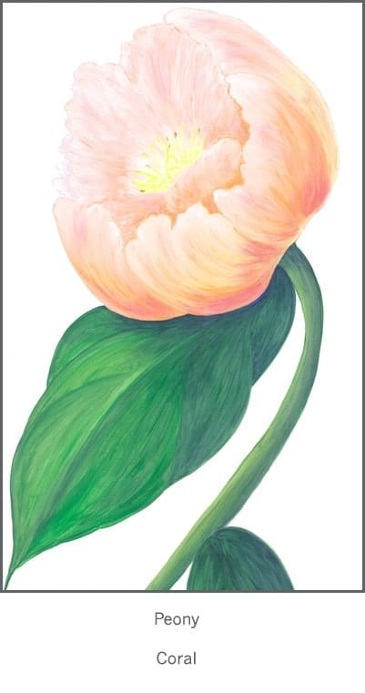 Casart Coral Single Peony Detail 2x
