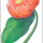 Casart Rose Single Peony Detail 4x
