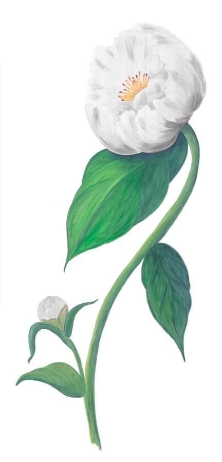 Casart White Single Peony 5