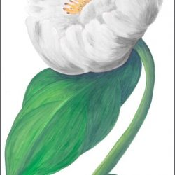 Casart White Single Peony Detail 5x