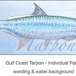 Casart Gulf Coast Tarpon water & wording_4x