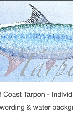 Casart Gulf Coast Tarpon water & wording_4x