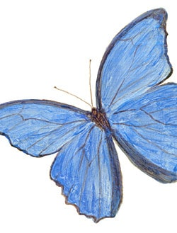 Casart_Blue Morpho Male Butterfly 2