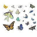 Casart_Butterfly Composite Sheet_1
