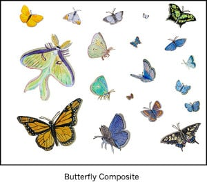 Casart_Butterfly Composite Sheet Detail_1x