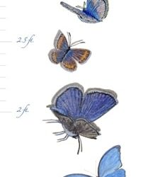 Casart coverings Butterfly Growth Chart – Tots Tweens & Teens (T3)