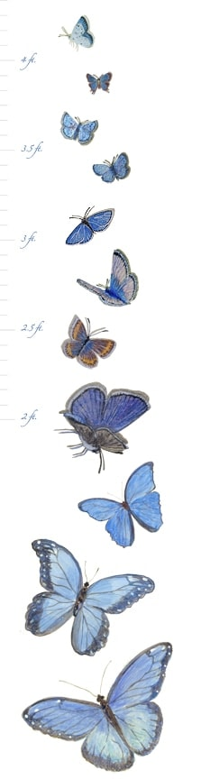 Casart Butterfly growth chart
