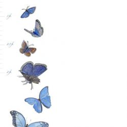 Casart Butterfly growth chart - T3 Collection
