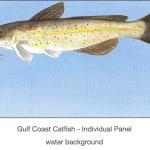 Casart_Gulf Coast Catfish water_2x